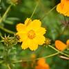 10月の誕生花と花言葉を紹介します。