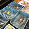 旅日記/本気ツーリング  〜秋の魚を持ち帰り〜
