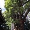 神崎④-神崎神社