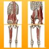 60歳の女性の膝の痛み(半月板損傷疑い)