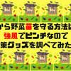 【家庭菜園】風から野菜苗を守る方法は?強風でピンチなので対策グッズを調べてみた!