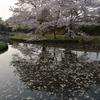 桜 三重県鈴鹿市