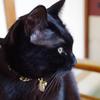 今日の黒猫モモ&白黒猫ナナの動画ー786