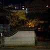 蝋梅の香り/寒ボラの臍(へそ)/江戸前の鮨