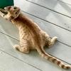 ポーポキpōpoki(猫)