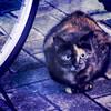 ペンタックスQで猫を撮る