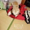【わんこと旅】 北海道へ!Story.3 (1日目:香川県から青森県へ行くのだっ!)