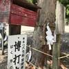 「マダム倶楽部」活動報告 サクッと金毘羅神社まで歩いて、賭け事に御利益があるという博打の木を見てきました♪ 5月16日