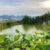 鴨根池(兵庫県洲本)