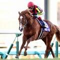 有馬記念 歴代優勝馬(勝ち馬) ランキング(過去20年から選出)