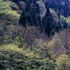 京都北山 初夏の光に息づく芦生の森