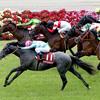 2018年京都新聞杯 GⅡ ディープインパクト産駒も良いが、欧州血統馬の相性も良い