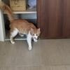 家に入り込んだ子猫&タイ料理ランチ