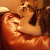 猫のコミュニケーションツール