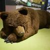 北海道博物館への暑い旅。
