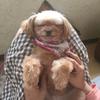 犬バカブログでスンマセーン