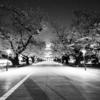 Snapshot ~『桜 2021』 #9