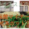 函館民の僕が、函館マイナー観光スポットを3つ考えてみた。