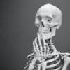 仙腸関節の構造は?