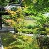 京都嵐山 鹿王院で夏の庭を楽しむ!~禅寺の庭に散る沙羅の花~