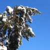 雪の朝、グジュさん、最近の食メモ。