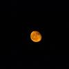今宵のお月様は非常に美しいかったのである