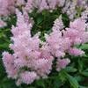 6月26日(火)  朝の花々  in  MORIOKA