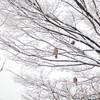 雪のオーブとラブ❤︎メッセージ