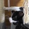 ★887鐘目『全米で大ブレイク!?永遠の子猫・リバブルに出会ってしまったでしょうの巻』【エムPのイケてる大人計画】