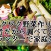 【ワクワク野菜作り!】初心者だから調べてみた!プランターで家庭菜園