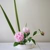 活け花教室で芍薬を活けました。