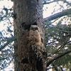 観察する仔フクロウ