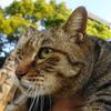 3月後半の #ねこ #cat #猫 その4