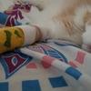 猫の新たな手術とリハビリについて