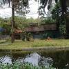 マレーシア国立動物園(18/02/17)【その2・大型ネコ科~パンダ~類人猿】