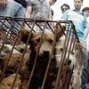 犬・猫の食肉市場 ベトナムやカンボジアではコロナ後さらに活発に