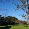 今日の犬山城は…『秋晴れーーー✨🍁✨』