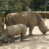 気分転換にハミルトン動物園に行く