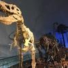 夫婦で加賀山中温泉旅行パート2、恐竜博物館&谷口屋のお揚げ感想♪
