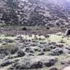 【ヒマラヤの旅⑬】ロブチェ(4910m)からの帰り道~ナムチェ~カラパタール(5550m)リアルな日記