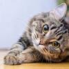 「ペット可」の物件でワンちゃん・ネコちゃんと暮らす際の注意点2⚠