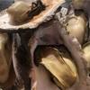 どちらが美味しい?西鳥取漁港&下荘漁港牡蠣小屋食べ比べ!