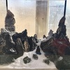 小型水槽でジオラマ系の水草レイアウトに挑戦!太陽光を使ってミスト式はできるのか実験しました。