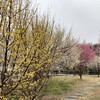 赤塚溜池公園 - 板橋区立美術館 - ぴっぽのたび