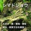 シマドジョウの飼育方法・混泳・餌・底砂・繁殖徹底解説!