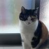 【愛猫日記】毎日アンヌさん#219