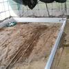 メダカの飼育池をつくります。