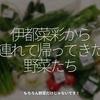 1282食目「伊都菜彩から連れて帰ってきた野菜たち」もちろん野菜だけじゃないです!