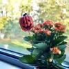 11月11日はオランダ版ハロウィン!伝統行事【シントマーテン祭】