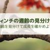 【フィンチ】雛(幼鳥)の週齢の見分け方と成長の目安【文鳥・キンカチョウ・ジュウシマツ】